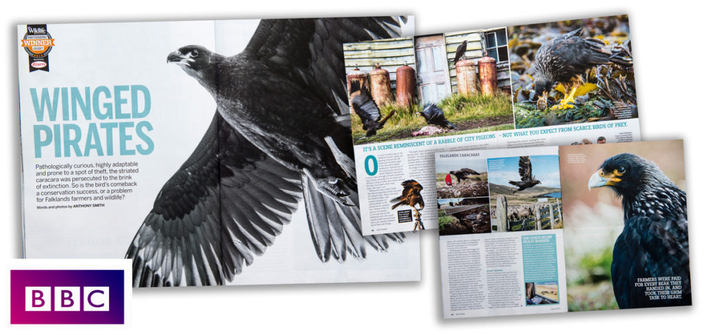 Article written and photographed by Anthony Smith for BBC Wildlife Magazine
